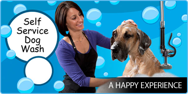 Tips to bathing your Dog Successfully