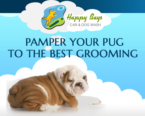 Pamper your Pug to the Best Grooming