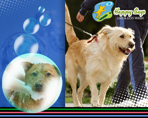 Why professional dog wash service a necessity washing your pet at home is not an easy task and if you have ever tried it yourself at home you surely know what a mess it can be solutioingenieria Gallery