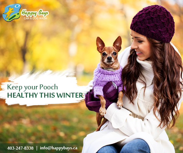 Winter care tips to take care of your four legged companion - Keeping outdoor dog happy winter ...