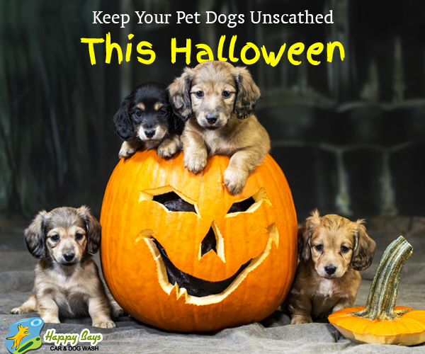 Pointers to keep your pet dogs unscathed this halloween solutioingenieria Images