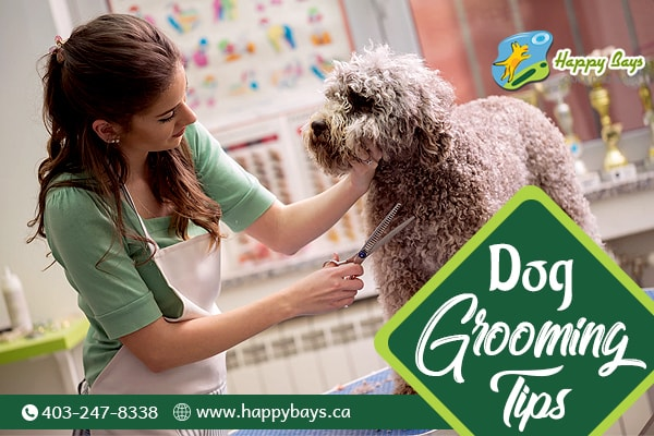 Dog Grooming Tips And Tricks