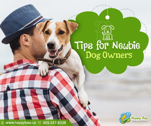 Tips for Newbie Dog Owners