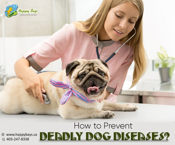 Prevent Deadly Dog Diseases
