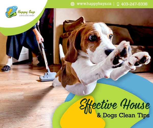 Effective House Dog Clean Tips