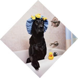 dog-wash-in-bathtub