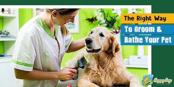 the_right_way_to_groom_and_bathe_your_pet_